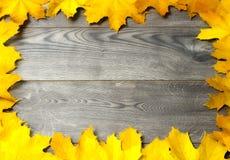 Quadro das folhas de bordo douradas Fotos de Stock