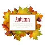 Quadro das folhas de outono Fotografia de Stock