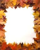 Quadro das folhas de outono Foto de Stock