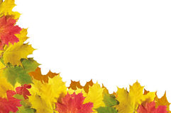 Quadro das folhas de outono sobre o branco para seu texto Imagem de Stock Royalty Free