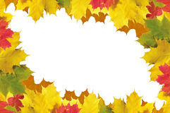 Quadro das folhas de outono sobre o branco para seu texto Imagens de Stock