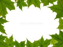 Quadro das folhas de plátano Imagens de Stock Royalty Free