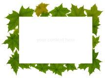 Quadro das folhas de plátano Foto de Stock Royalty Free
