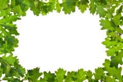 Quadro das folhas do carvalho no luminoso Imagens de Stock Royalty Free