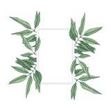 Quadro das folhas do vetor ilustração do vetor