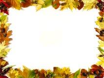 Quadro das folhas III Imagens de Stock Royalty Free