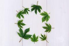 Quadro das folhas na tabela de madeira Foto de Stock Royalty Free