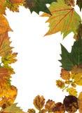 Quadro das folhas secadas. Imagens de Stock
