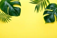 Quadro das folhas tropicais Monstera e da palma no fundo amarelo um espaço para o texto Vista superior, configuração lisa, imagem de stock