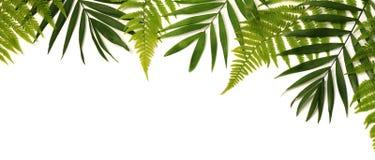 Quadro das folhas verdes Foto de Stock Royalty Free