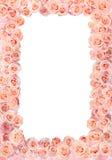 Quadro das rosas foto de stock royalty free