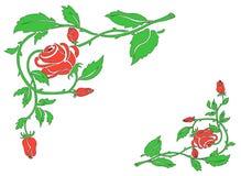 Quadro das rosas Fotos de Stock