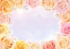 Quadro das rosas e das flores da cereja fotos de stock royalty free