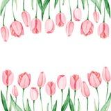 Quadro das tulipas da aquarela Dia internacional do ` s das mulheres Para o projeto, o cartão, a cópia ou o fundo Foto de Stock Royalty Free