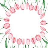 Quadro das tulipas da aquarela Dia internacional do ` s das mulheres Para o projeto, o cartão, a cópia ou o fundo Fotos de Stock