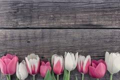 Quadro das tulipas no fundo de madeira rústico com espaço da cópia para Fotos de Stock