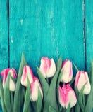Quadro das tulipas no fundo de madeira rústico de turquesa Mola fl Foto de Stock Royalty Free