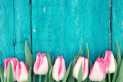 Quadro das tulipas no fundo de madeira rústico de turquesa Mola fl Imagens de Stock Royalty Free