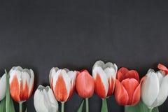 Quadro das tulipas no fundo de pedra preto com espaço da cópia para mim Foto de Stock