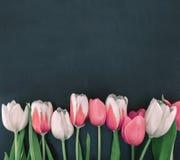 Quadro das tulipas no fundo de pedra preto com espaço da cópia para mim Imagem de Stock Royalty Free