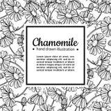 Quadro de desenho do vetor da camomila Flor selvagem e folhas isoladas da margarida Ilustração gravada erval do estilo Imagens de Stock Royalty Free