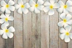 Quadro de flores do plumeria em de madeira velho foto de stock