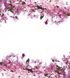 Quadro de flores e de espaço da mola para o texto Foto de Stock Royalty Free