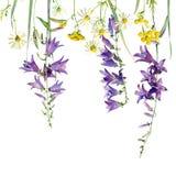 Quadro de flores selvagens ilustração royalty free