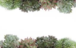 Quadro de florescência suculento da beira do houseplant fotos de stock royalty free