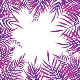 Quadro de folhas de palmeira tropicais no fundo branco ilustração do vetor