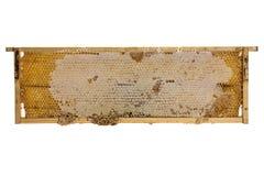 Quadro de madeira com favos de mel da abelha Fotografia de Stock