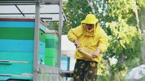 Quadro de madeira limpo do mel do homem novo do apicultor que trabalha no apiário no dia de verão vídeos de arquivo