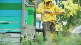 Quadro de madeira limpo do mel do homem novo do apicultor que trabalha no apiário no dia de verão filme