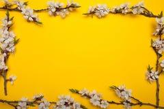 Quadro de Minimalistic de ramos de florescência do abricó em um fundo amarelo, espaço vazio para o texto ilustração do vetor