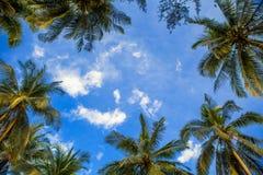 Quadro de palmeiras do coco com céu azul fotos de stock
