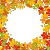 Quadro de queda da folha do outono isolado no fundo branco Fotografia de Stock
