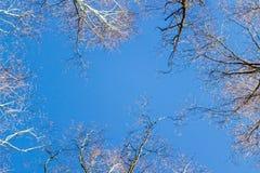 Quadro de ramos de árvore contra o céu azul Imagens de Stock Royalty Free
