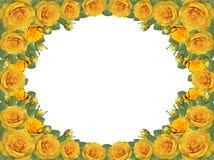Quadro de rosas amarelas em um fundo transparente ilustração stock