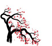 Quadro de sakura da aquarela Fundo com ramos de árvore da cereja da flor O japonês tirado mão floresce o fundo ilustração stock