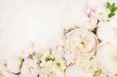 Quadro delicado de florescência do casamento das rosas brancas do verão imagem de stock royalty free