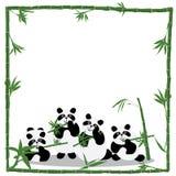 Quadro do bambu do amor da panda ilustração royalty free