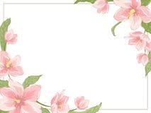 Quadro do canto do hellebore de sakura da magnólia horizontal Foto de Stock