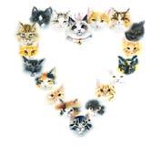 Quadro do coração dos gatos domésticos Ilustração tirada mão da aquarela ilustração stock