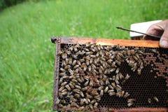 Quadro do favo de mel enchido com o mel Fotos de Stock Royalty Free