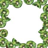 Quadro do fruto de quivi Ilustra??o da aguarela em um fundo branco ilustração stock