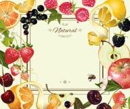Quadro do fruto e da baga ilustração do vetor