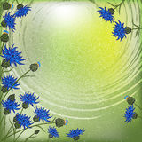 Quadro do fundo com cornflowers no céu Foto de Stock