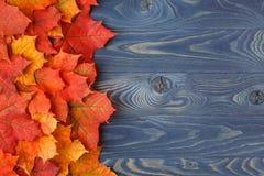 Quadro do fundo da queda com as folhas de bordo no azul Imagem de Stock