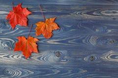Quadro do fundo da queda com as folhas de bordo no azul Imagens de Stock Royalty Free