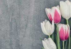 Quadro do fundo do onstone das tulipas com espaço da cópia para a mensagem Imagem de Stock